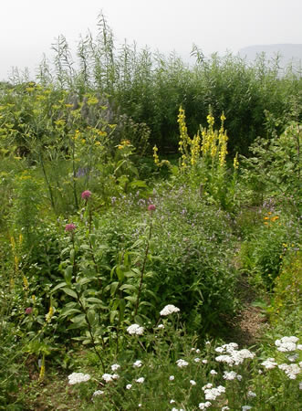 herbs (1)